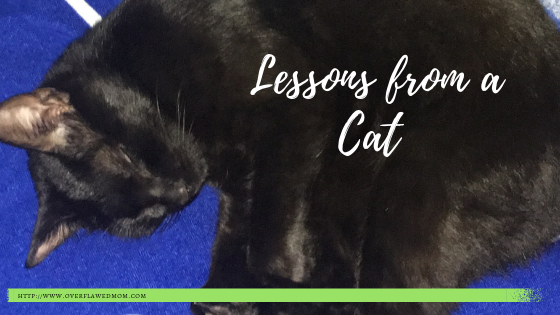 Lessons From a Cat